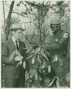 Forest Officers Examining Rhododendron in Southern Woodlands